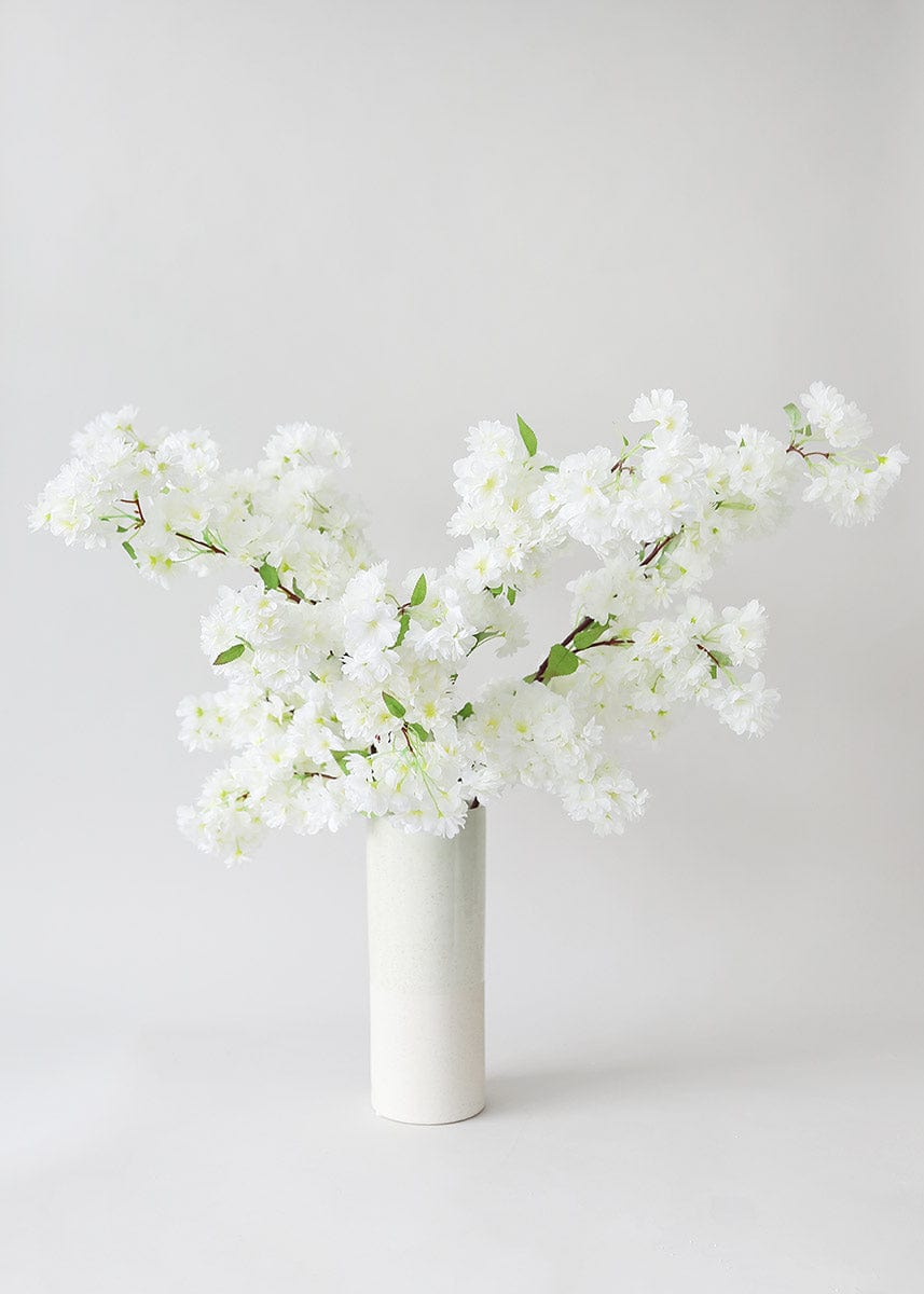 White Cherry Blossom Branches in Vase