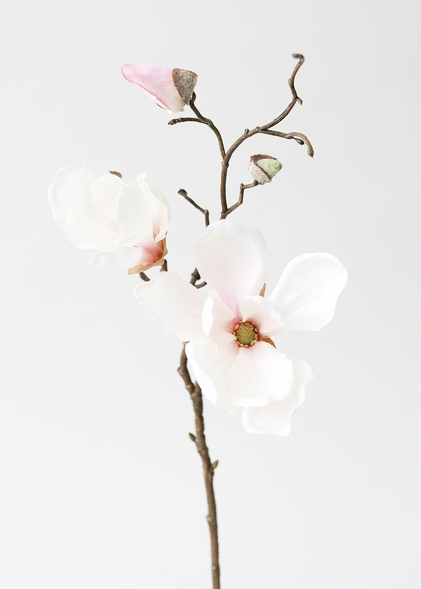Soft Pink Magnolia Flower