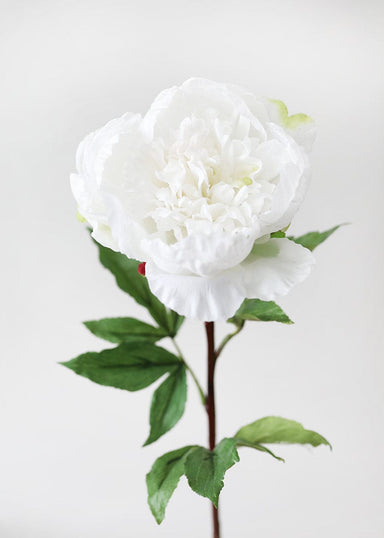 Natural Touch Peony in White