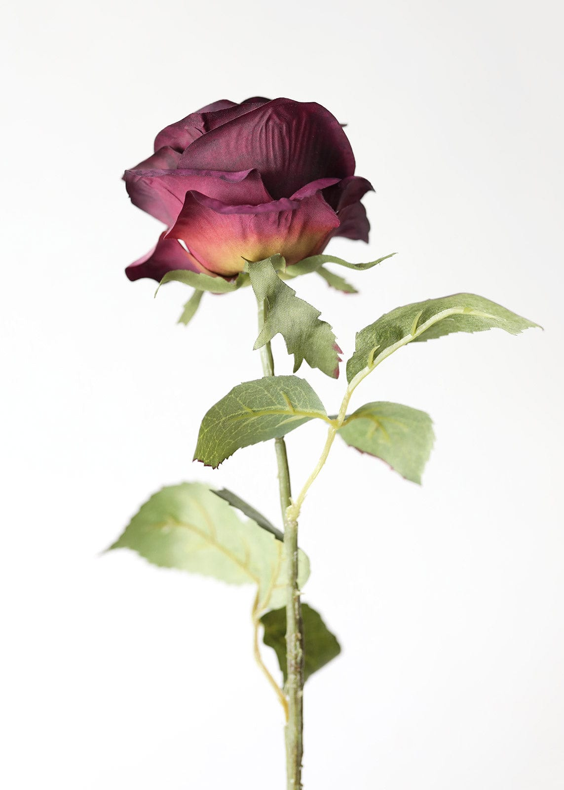 Back of Silk Purple Rose