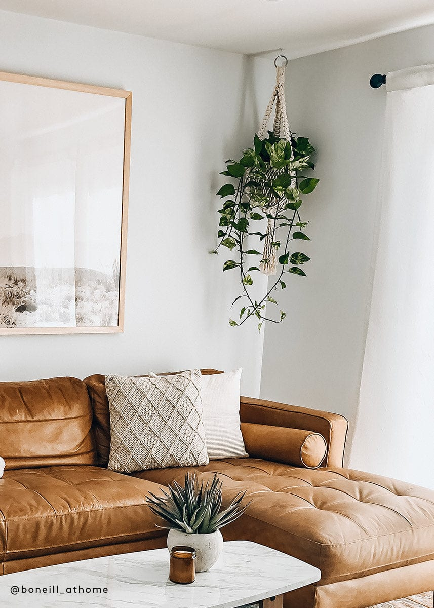 Fake Hanging Pathos Plant in Living Room Decor