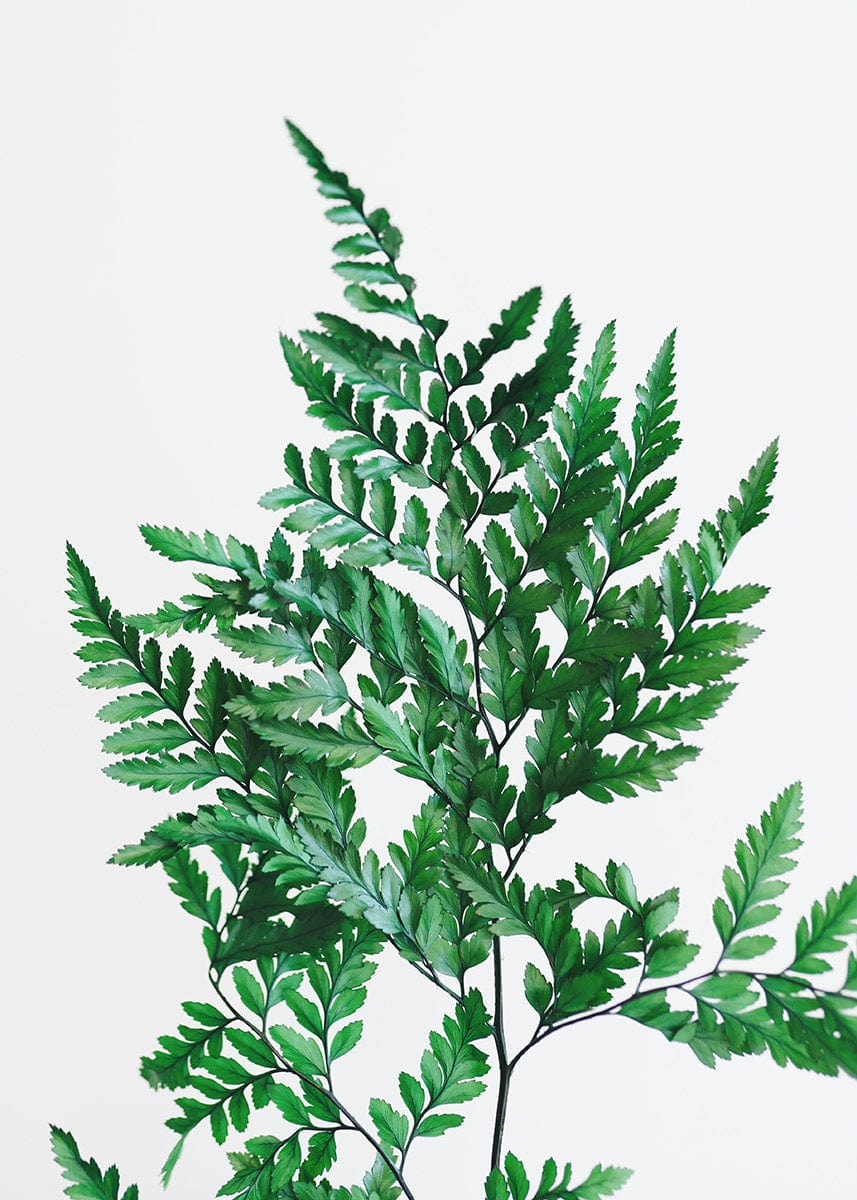 Leatherleaf Fern Greenery