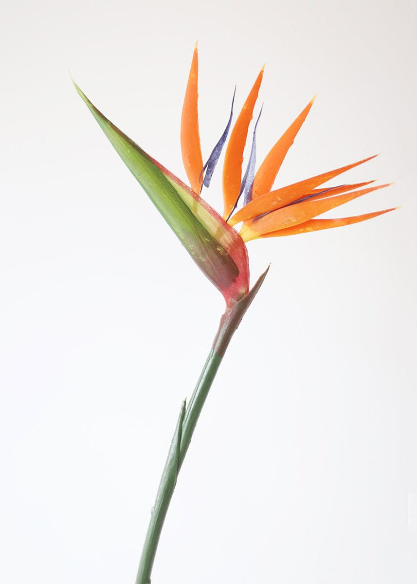 Orange and Blue Indoor/Outdoor Bird of Paradise