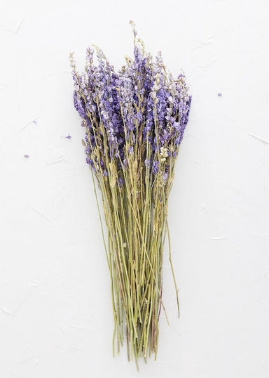 Dried Purple Larkspur Bundle