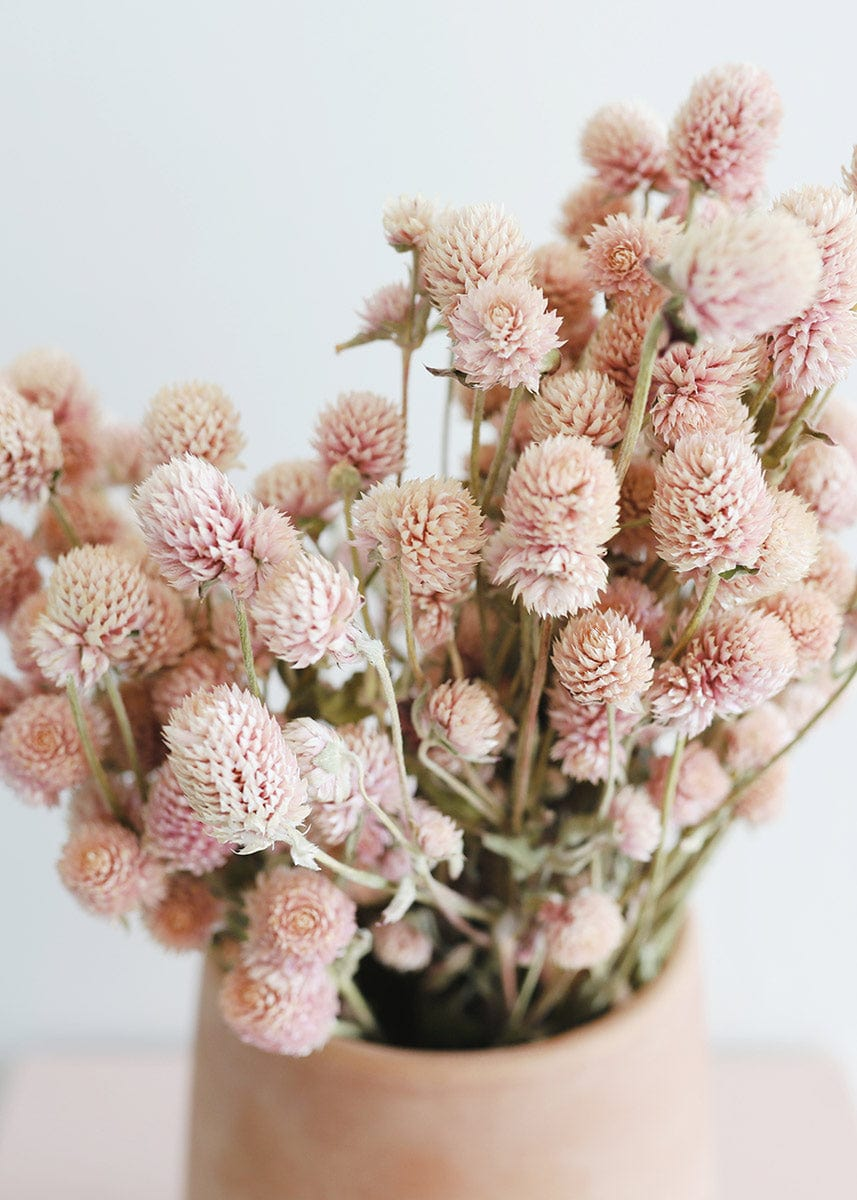 Pink Dried Amaranths Flowers