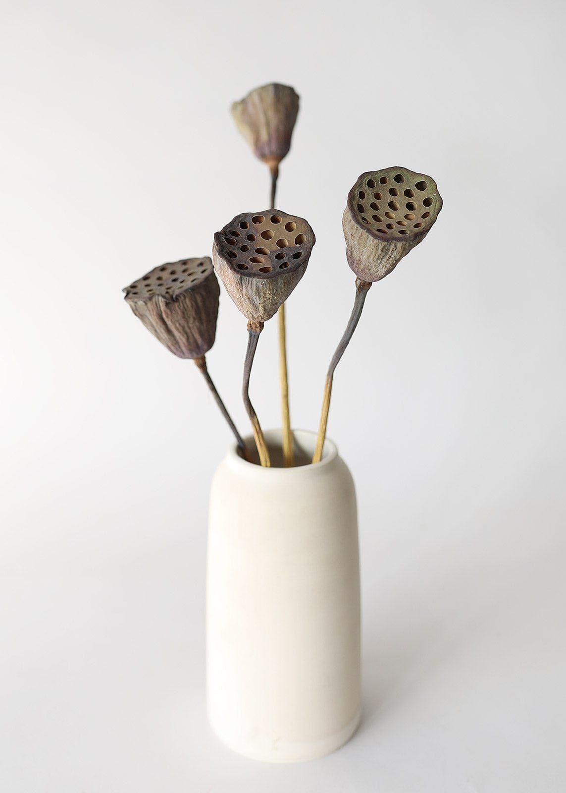 Natural Lotus Pods in Vase