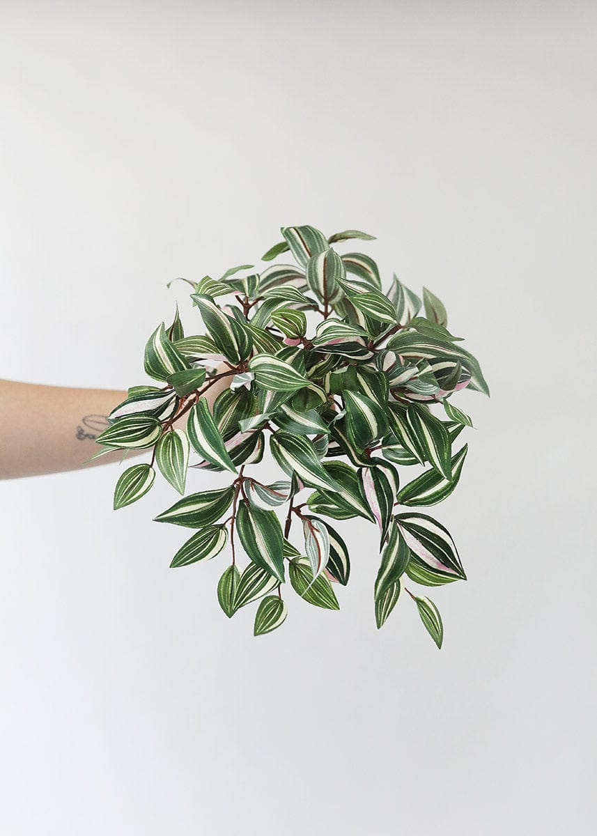 House Plant Fake Wandering Jew