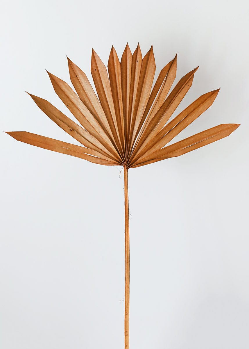 Single Brown Dried Palm Leaf