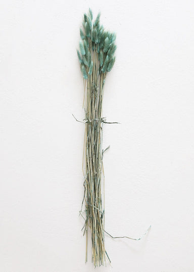 Dried Bunny Tail Grasses in Blue Green