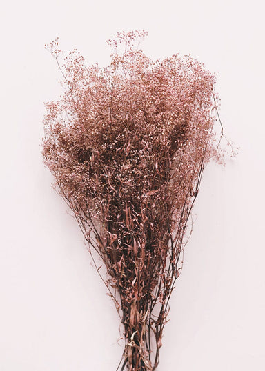 Dried Babys Breath in Mauve Pink
