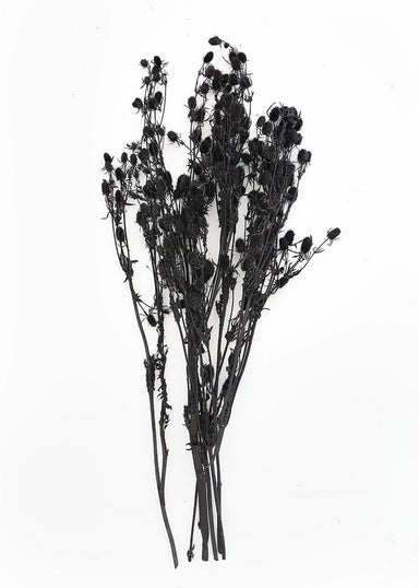 Dried Florals Black Sea Holly