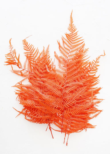 Preserved Orange Fern Bundle
