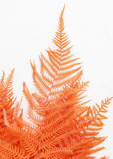 Preserved Orange Ferns