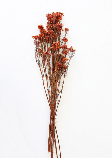 Preserved Terra Cotta Rice Flowers