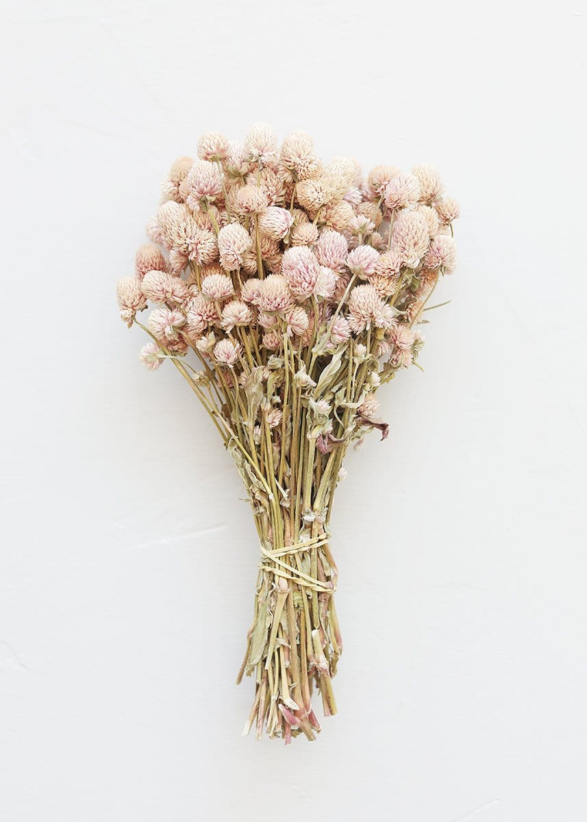 Air Dried Globe Amaranth in Light Pink
