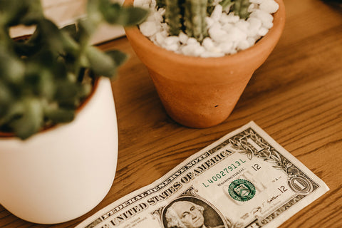 Dollar Bill on Table next to Potted Plants