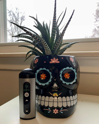 The silver Ooze Drought dry herb vaporizer is on a white table next to a window, right in front of a succulent in a sugar skull planter.