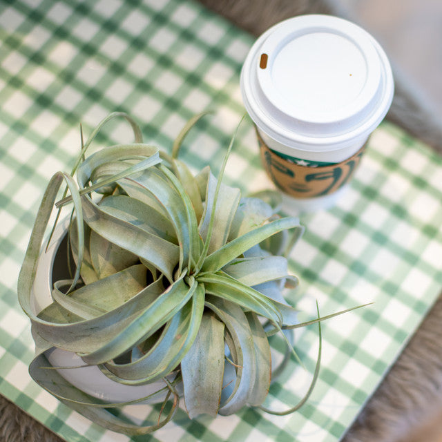 Paper Placemats | Dark Green Painted Check
