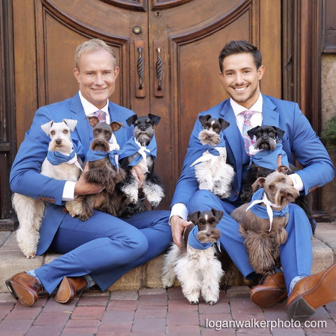 Suits and dogs