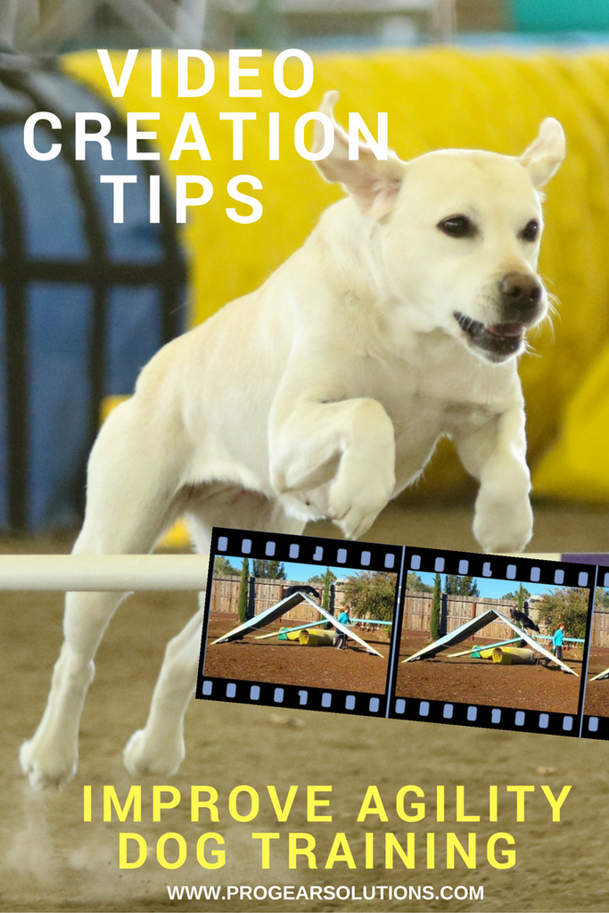 The SECRET to FASTER Agility Dog Training that I Wish I'd Known Years Ago