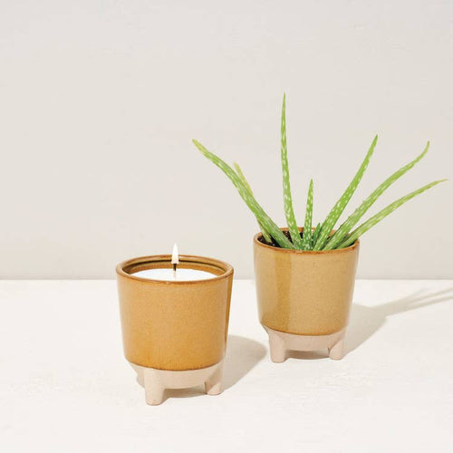 Candle and plant, aloe. Perfect gift for housewarming, Christmas or just because. Zuzu's Petals Chicago florist and boutique in Bridgeport neighborhood on Halsted.