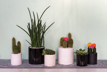 Load image into Gallery viewer, Cercle Planter/Vase Collection