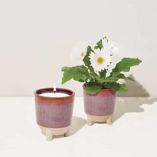 Perfect gift candle and plant. Zuzu's Petals Chicago florist boutique gift shop in Bridgeport on Halsted.