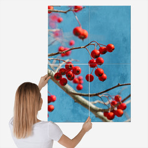 Bright Red Crabapples Hang From A Tree With Blue Sky An ...