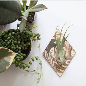 Marbled Wood Air Plant Magnet
