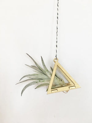 Gold Triangle Air Plant Hanger