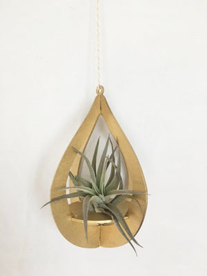 Gold Teardrop Air Plant Hanger