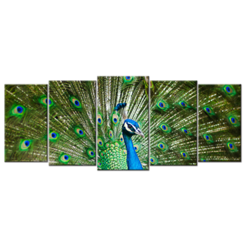 """Peacock"", Five(5) Panel Canvas Wall Art"