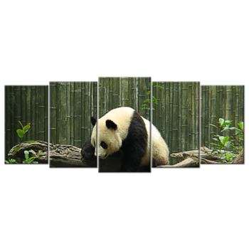 """Panda Bear"", Five(5) Panel Canvas Wall Art"