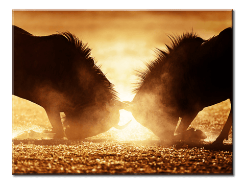 """A Battle Between Two Animals"", 1 Panel Canvas Wall Art In L And XL Sizes"