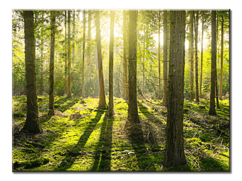 """Sunlight Penetrates The Forest"", 1 Panel Canvas Wall Art In L And XL Sizes"