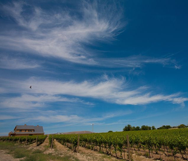 Vineyard and sky.