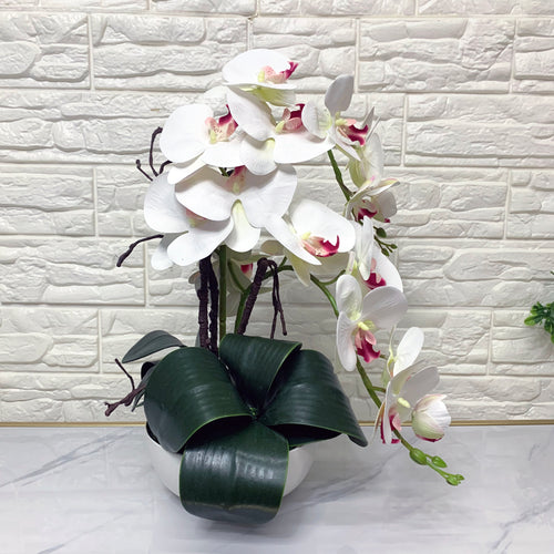 White Bowl Orchids
