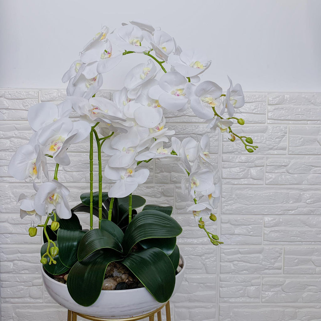 Exclusive Phalaenopsis Orchids with Marble base