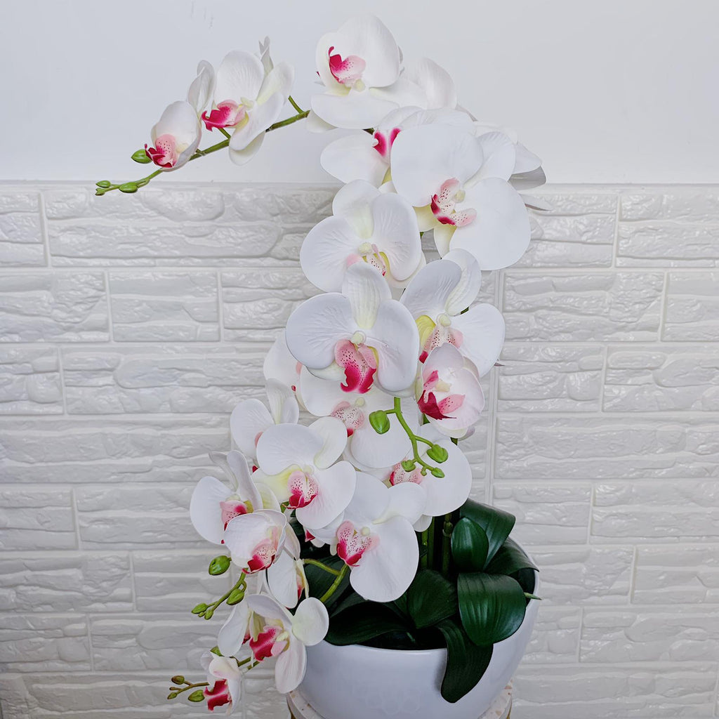 Crisp White Phalenopsis with Red Centre Orchid Arrangement