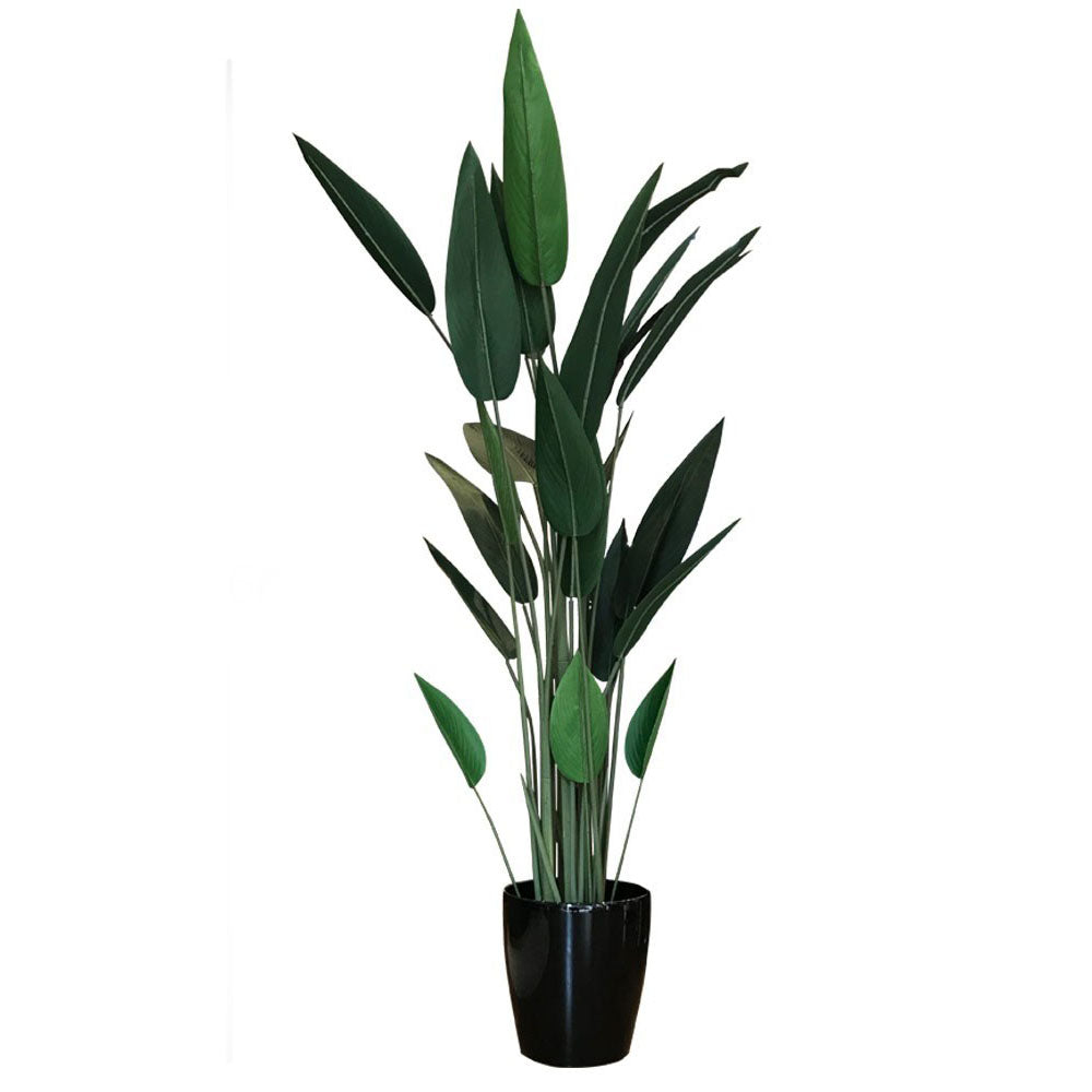 Potted Sky Bird Plant 1.8M