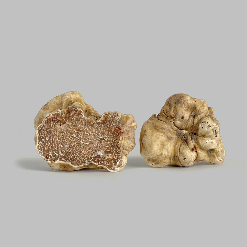 CHEF PRICE Fresh Italian White Truffles - Price per pound