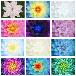 Hoffman Dream Big Flower Panels