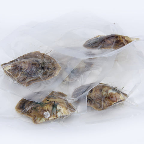 20 AKOYA Oysters with Pearls - The Indulge Store
