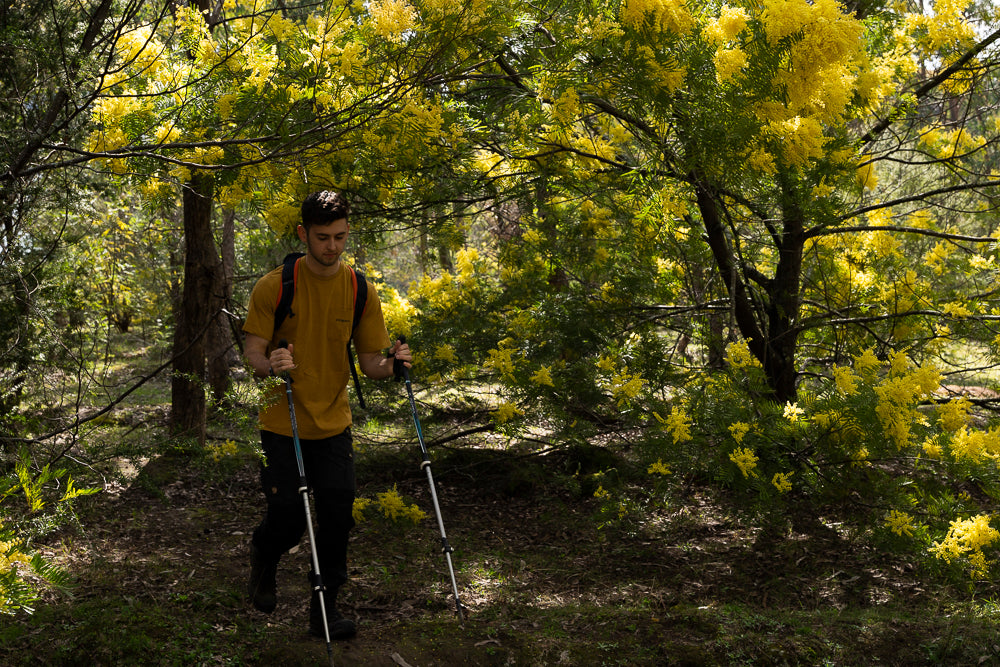 Dom walking under the wattle at the start of the track leading up to Chimney Rock