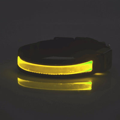 Led Safety Dog/Cat Collar - With Your Pet's NAME!