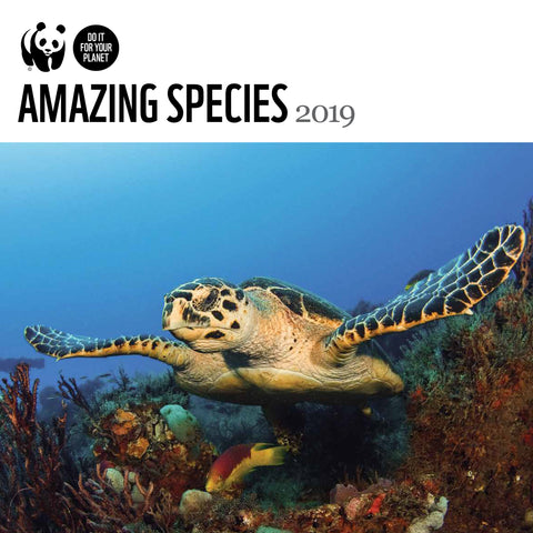 Amazing Species Wall Calendar 2019