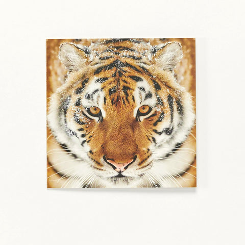Hello Tiger - pack of 10 Christmas Cards