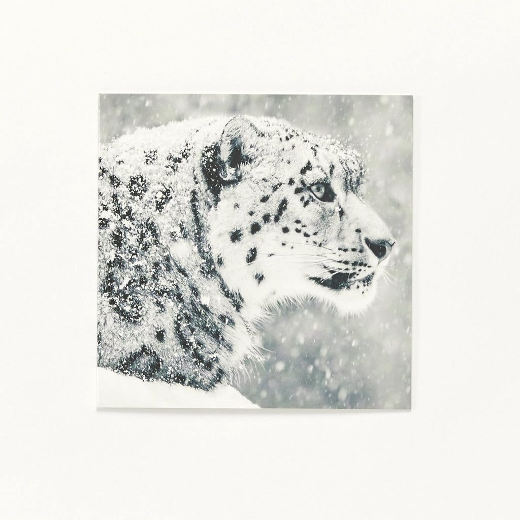 Beautiful Boy - Pack of 10 Christmas Cards – WWF UK online shop