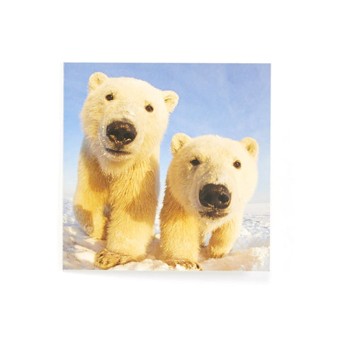 Who's There? - Pack of 10 Christmas Cards