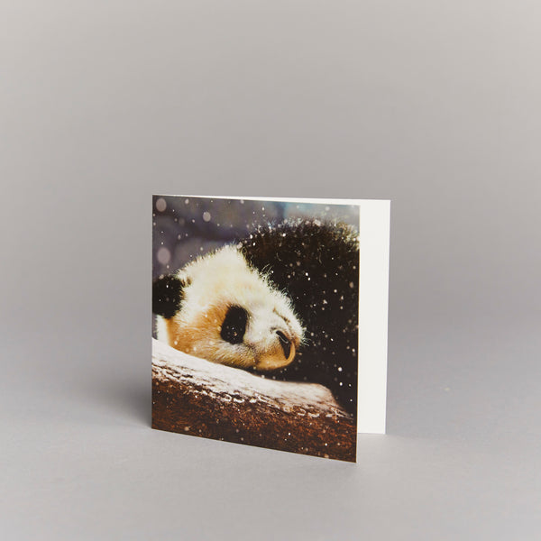Resting Panda Cub (pack of 10) Christmas cards